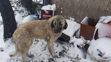 (Özel) Ormanlık alana terk edilmiş 12 köpek donmak üzereyken bulundu